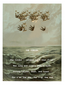 hero-the-condor