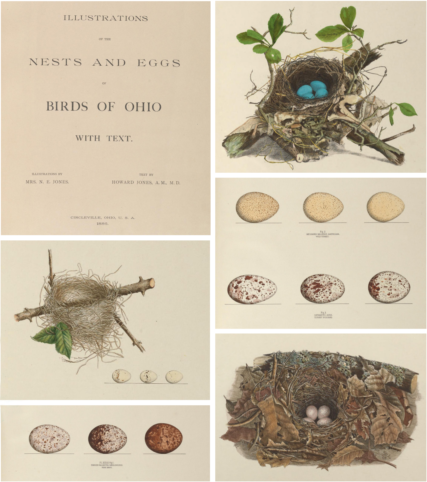 bird-egg-book