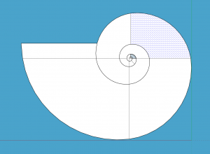 After tracing a 2D image of the shell, I then created the curves, which is essential for the shape of the shell
