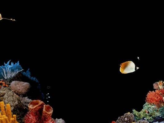 Underwater Aquarium - Windows 98