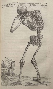 A 16th century sad skeleton from Andreas Vesalius who was probably the first anatomist.