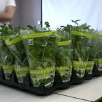 photo of potted herbs
