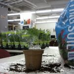 still life photo of bag of potting soil and potted herbs in the background