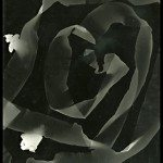 Photogram Series