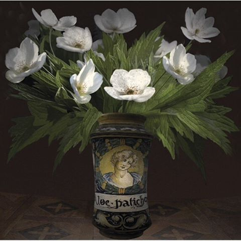 Elaine Waisglass, Historic Italian Pharmaceutical Vessel with Anemones Canadensis, Archival pigment print, edition 2 of 12 2016, 40 x 40 inches Courtesy of the artist and Roberts Gallery Estimate: $5,500