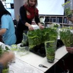 photo of people handling potted herbs